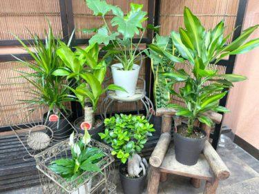 鉢物の管理方法(2)観葉植物